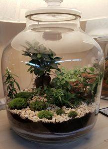 green cocoon terrarium lampe plante Lacroix
